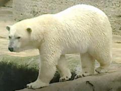 S.O.S. in Arctic. Cinci cercetatori sunt inconjurati de ursi polari de doua saptamani