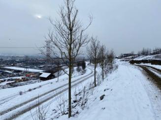 S-a asternut zapada peste Padurea Clujenilor! Peisaje superbe de iarna, surprinse in viitorul Parc al Tineretului - FOTO