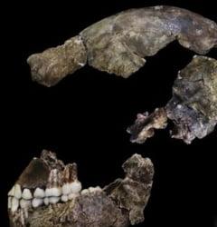 S-a descoperit o noua specie de om? - Cum arata stramosul nostru (Video)
