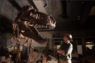 S-a gasit cel mai mare Tyrannosaurus rex! Era de-a dreptul fioros si foarte batran