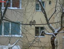 S-a intors iarna in Harghita - pe mai multe drumuri se intervine cu utilaje de deszapezire
