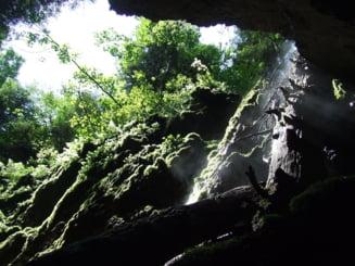 S-au gasit cele mai vechi ramasite ale unui Homo erectus!