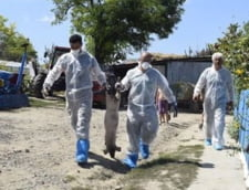 SRI a informat Guvernul cu privire la pericolul pestei porcine inca din iunie 2016. Sunt in pericol si oile