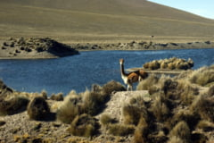 STUDIU Femeile din preistorie participau la expeditii de vanatoare, inclusiv la cele care vizau animale salbatice de talie mare