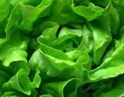 Salata verde, un remediu purificator extraordinar