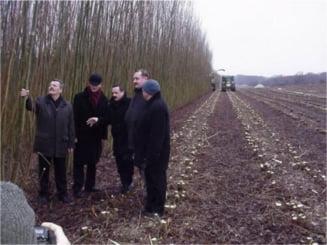 Salcia energetica, solutia pentru agricultura si energie