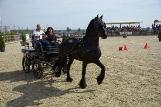 Salonului Calului: Spectacol ecvestru si concursuri de echitatie la nivel inalt