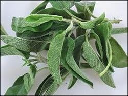 Salvia previne astenia de primavara
