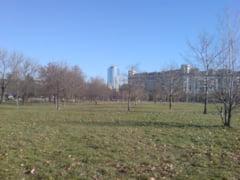 Saptamana viitoare incep replantarile in Parcul Izvor