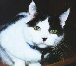 Sapte luni de inchisoare pentru ca a ucis o pisica