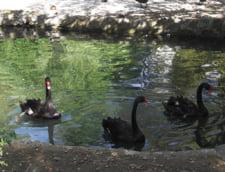 Sarbatoarea pasarilor la Zoo Baneasa: Evenimente speciale pentru copii