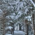 Sarbatori de iarna la preturi speciale - vezi ofertele de ultim moment