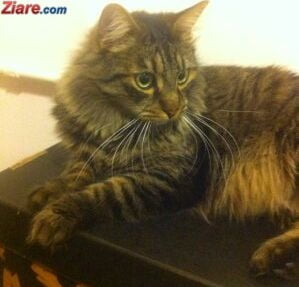 Sarbatoriti-va micii prieteni: Azi e Ziua Internationala a Pisicii