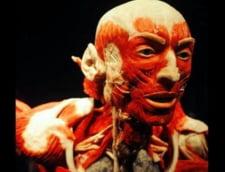 Sase modificari uluitoare ale organismului uman fata de strabunicii nostri: Evolutii nestiute in corpul omenesc