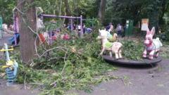 Sase raniti, intre care trei copii, in parcul Cismigiu - o creanga a cazut peste ei, langa locul de joaca