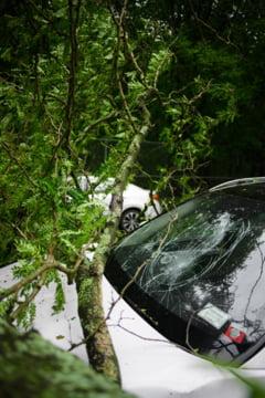 Satu Mare: Femeie accidentata mortal dupa ce un autoturism a fost proiectat de alt autovehicul intr-o florarie