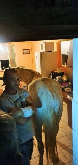 Satu Mare: Un cal a fost gasit de politie intr-un apartament, la etajul 4 (Foto&Video)