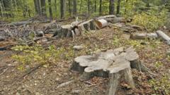 Scandal monstru pe padurile din Tarna Mare