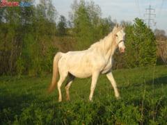 Scandalul carnii de cal: ANSVSA controleaza rafturile magazinelor din toata tara