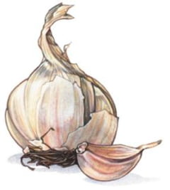 Scapa de negi cu usturoi in doar doua saptamani!