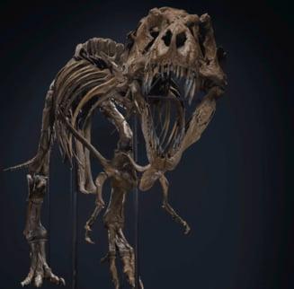 Scheletul unui T-Rex, scos la licitatie la New York. Care este pretul de vanzare estimat