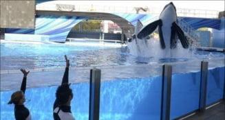 Sclavia la balene, adusa in discutia unui tribunal american, in premiera