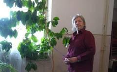 Scriitorul Ion Margineanu are un arbore de cafea, erou de roman