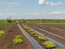 Se cultiva bio si in Romania! Povestea fermierului de 37 de ani din Calarasi, care si-a lasat afacerile pentru a produce cartofi sanatosi