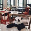 Se deschid restaurantele, dar e greu cu distantarea sociala. Ideea de geniu cu care a venit un local vietnamez