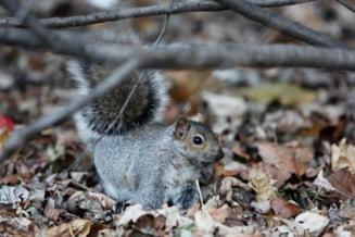 Se intampla-n Romania: 4.600 de euro pentru o casa pentru veverite
