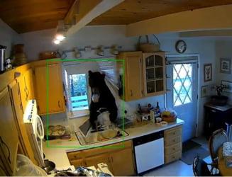 Se intampla si la case mai mari. Un urs a intrat intr-o locuinta cautand dulciuri. Nici macar nu era prima oara (Video)