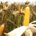 Seceta din SUA ar putea duce la o criza alimentara globala