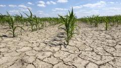Seceta in majoritatea regiunilor agricole din tara, in urmatoarea perioada. Regimul termic va fi normal