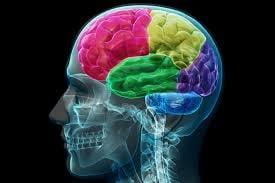 Secrete pentru a avea un creier sanatos