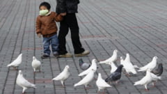 Securitate la sange in China: 10.000 de porumbei au fost controlati corporal