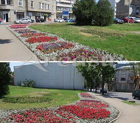 Semnal(!) Maidanul cu flori...