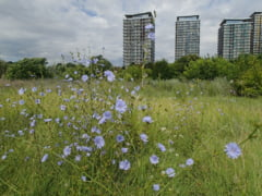 Semnal de alarma: 150 de hectare de spatii verzi din Bucuresti in pericol sa fie defrisate