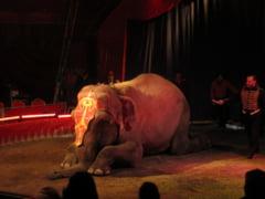 Sfantu Gheorghe, pro si contra animalelor in circuri