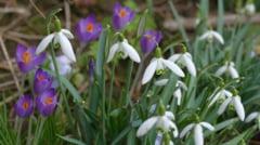 Sfarsit de februarie cu pana la 19 grade. Cum va fi vremea de 1 si 8 martie