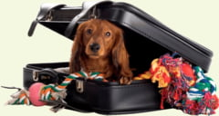Sfaturi utile pentru transportul animalului de companie in concediu