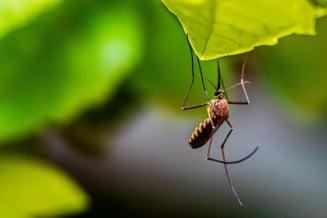 """Simptomele care impun prezentarea de urgență la spital, în cazul înțepăturilor de țânțari. """"Nu există un tratament specific pentru virusul West Nile"""""""