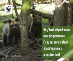 Singurul orfelinat pentru ursi din Romania este in pericol. Implica-te si salveaza puii de urs!