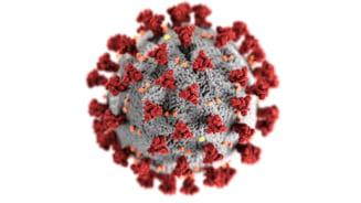 Situatia COVID-19 in lume: Pandemia a facut aproape un milion de victime