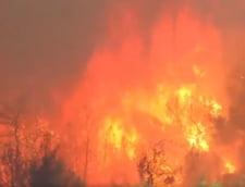 Situatia este critica pe insula Evia din cauza incendiilor. Grecia a cerut ajutor altor tari (Video&Foto)