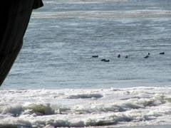 Situatie de urgenta pe Dunare: zeci de ambarcatiuni, blocate in gheata
