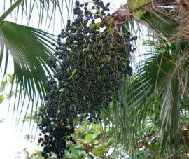 Slabeste cu fructele acai si rodii