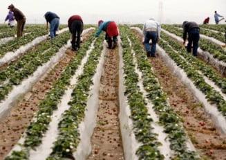 Spania: Noi instructiuni la restrictiile pentru muncitorii romani