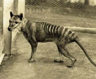Specii de animale disparute, care ar putea fi readuse la viata (Galerie foto)