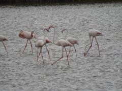 Spectacol rar in Delta Dunarii! Ce pasari au putut fi observate ieri in rezervatie FOTO