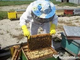 Sprijin financiar pentru apicultori